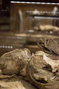 Monsampolo del Tronto - Museo della Cripta_DSC_5310